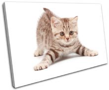 Cat Kitten Pets Animals - 13-1047(00B)-SG32-LO